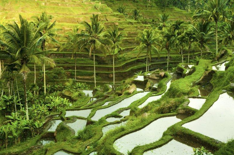 Voordelig naar Bali vliegen