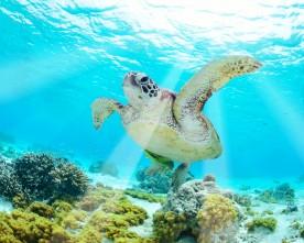 De mooiste snorkelplekken in Europa
