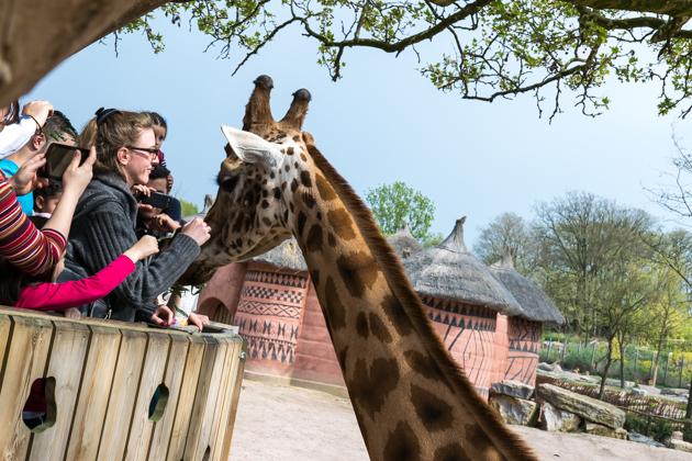 Top 10 dierentuinen Nederland & België
