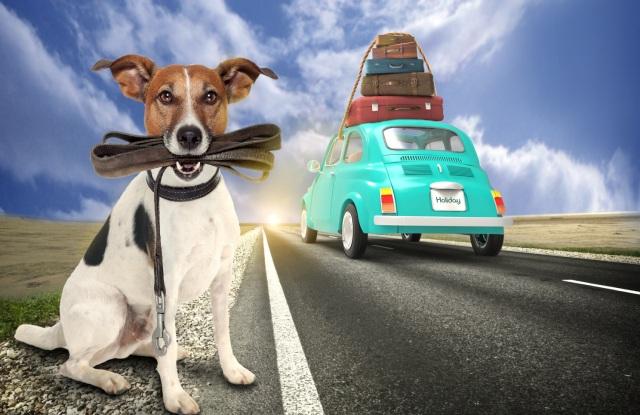 Jouw huisdier op vakantie