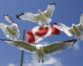 ETA Canada roept veel vragen op