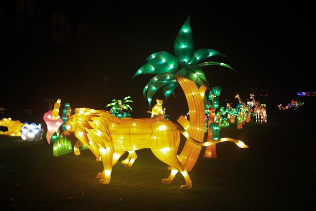 antwerpen-zoo-china-light10