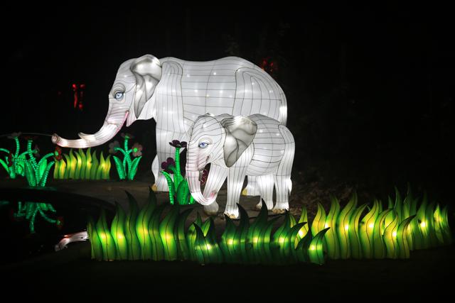 antwerpen-zoo-china-light7