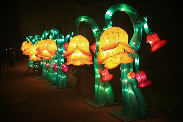 antwerpen-zoo-china-light8