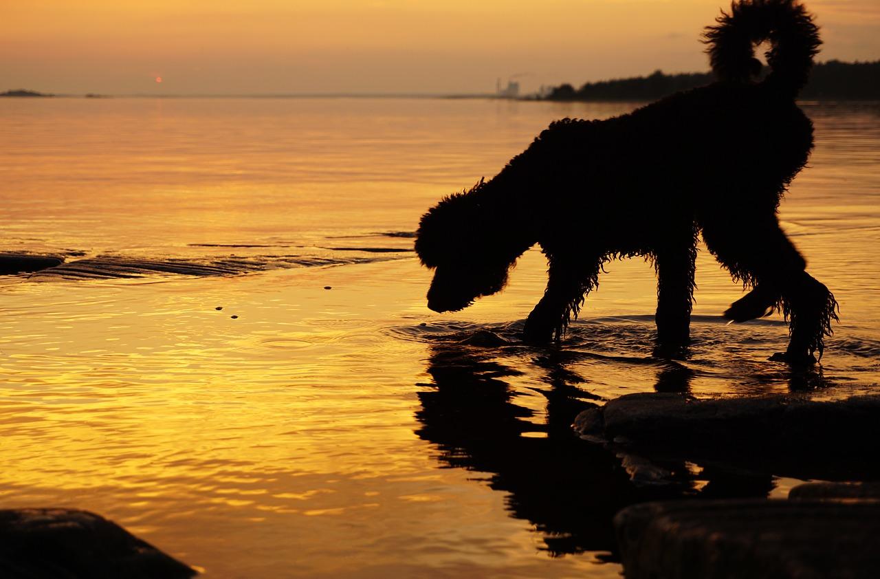 Neem voldoende hondenvoer mee op vakantie