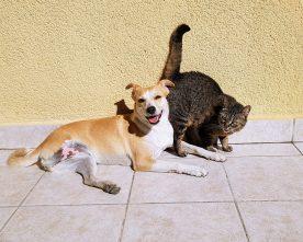 Hond of kat mee op vakantie?