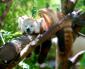 Top 5 leukste dierentuinen van Europa