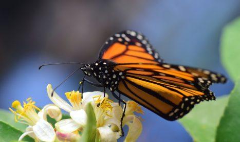 Vlindervallei op Rhodos