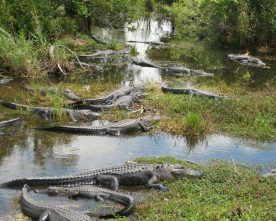 Nationaal Park Everglades