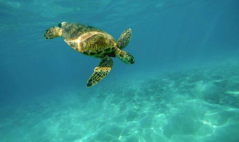 Toegang tot zee rond Bonaire veel duurder