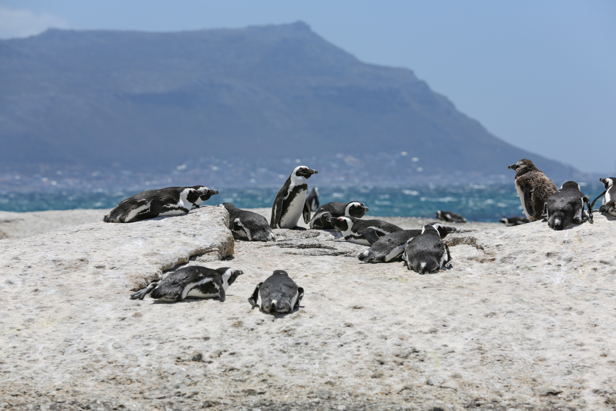 Zuid-Afrika als vakantiebestemming na de crisis?
