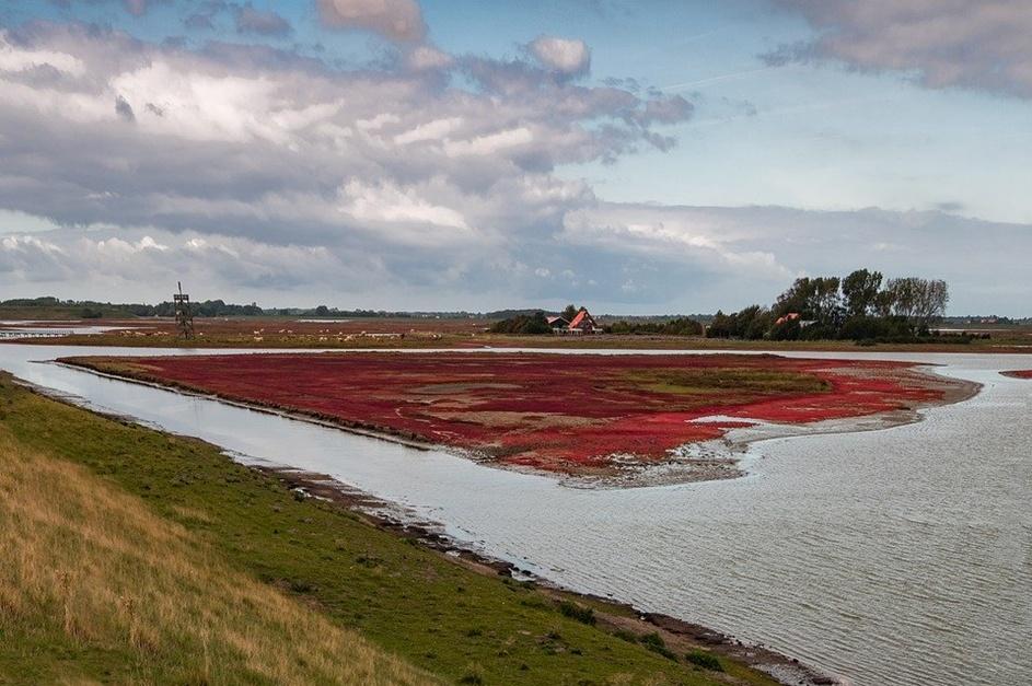 Erop uit in eigen land; dit zijn de mooiste natuurgebieden van Nederland