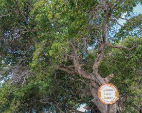 5 dingen die je NIET moet doen op Curaçao
