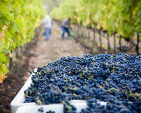 4 prachtige wijnroutes in Frankrijk